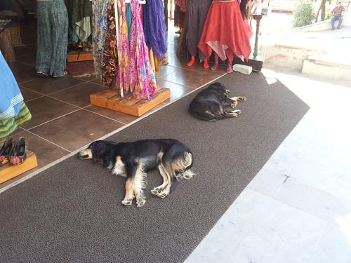 A kutyák is alszanak