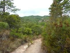 Sentier de Cuperchjata Nord depuis la piste de l'Osu : la piste, le versant de montée de la sente (et le ruisseau de Pisciarone non indiqué sur IGN)