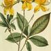 Flora Europaea inchoata. fasc.1-7.