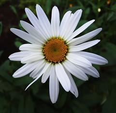 Misc. Flowers