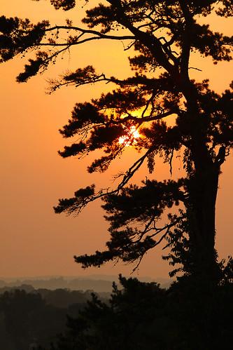 orange usa tree chattanooga america canon ga georgia northgeorgia projectorange fortoglethorpe projectrainbow canon50d virginiabaileyphotography