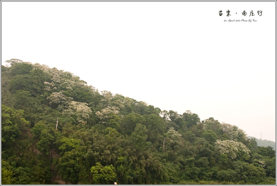 旅行I苗栗南庄.山城中的五月雪