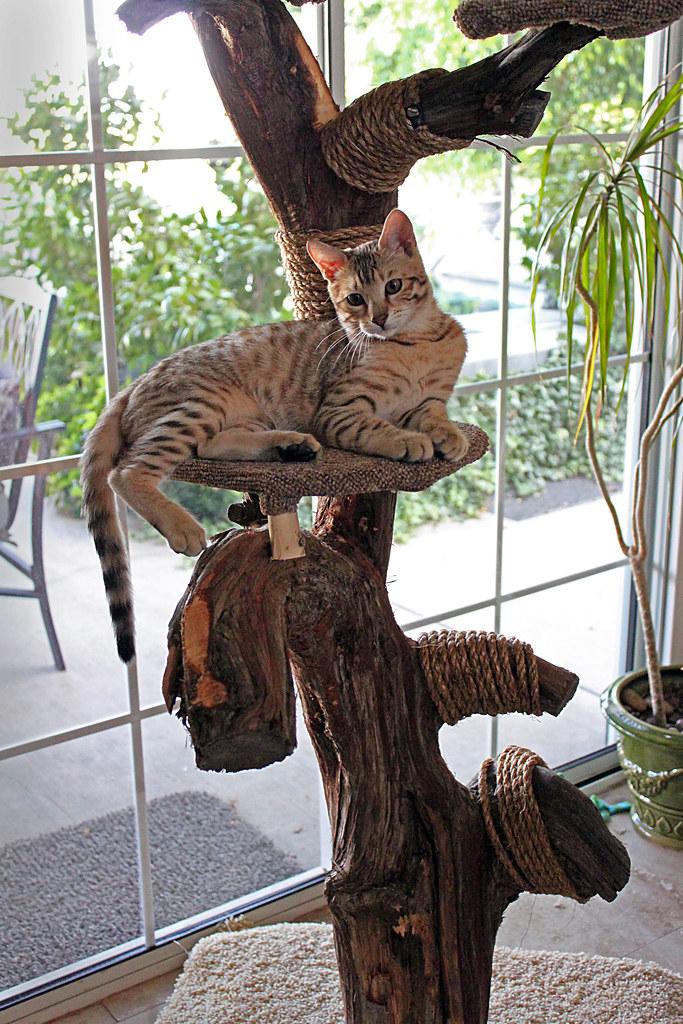 Dexter's Cat Tree