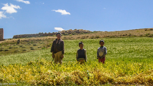 Hazara Child Farmers at Hajigak Pass | Bamiyan | Afghanistan