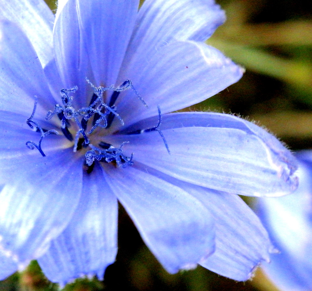 NAMES OF BLUE FLOWERS - NAMES OF BLUE FLOWERS