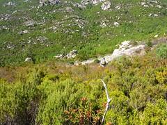 Versant Ouest de Castellu Muratu : descente dans le maquis