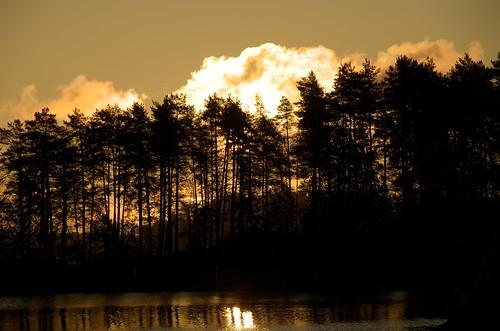 trees silhouette sunrise finland fi kuopio