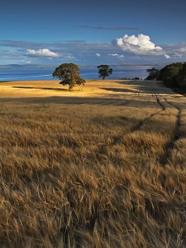ireland tree field sunshine canon shadows farm grain cereal harvest crop 1770 donegal arable sigmalens tillage topshots 60d worldwidelandscapes springbarley flickrsportal