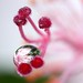 A tear Drop in Pink ...... Happy Sree Krishna jayanthi, Dear friends........