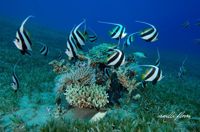 Seagrass and seagrass beds smithsonian ocean portal - Seagrass Beds Submited Images Pic2fly