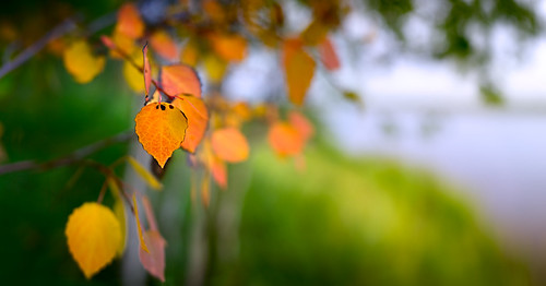 autumn light wild panorama macro nature ecology zeiss landscape outdoors woods flora niceshot bokeh north explore distagon carlzzeiss czcontaxdistagon3514 czdistagon czdistagoncom