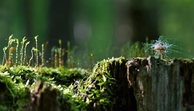 fungus on a fungi