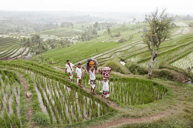 Jatiluwih rice terrace bali sing your way home for What does terrace farming mean