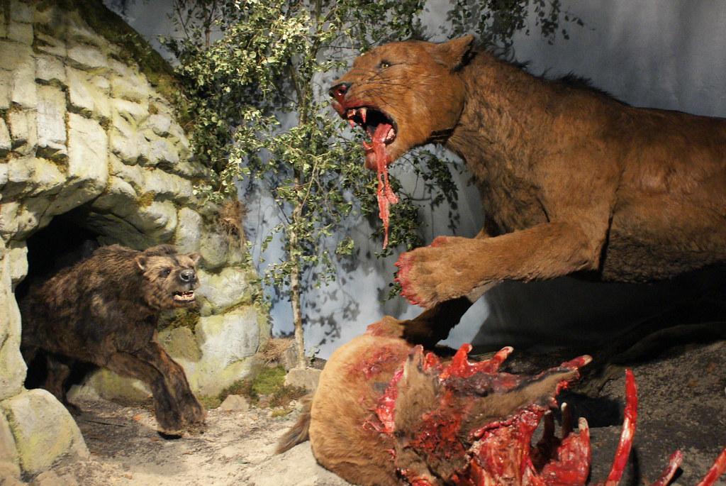 Cave lion & cave hyaena