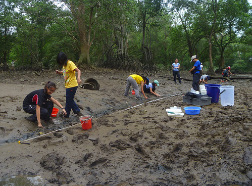 Mega Marine Survey: Checking out Mandai mangrove mudflats