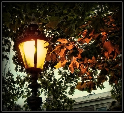 uk autumn trees light nature lamp leaves seasons preston kartpostal