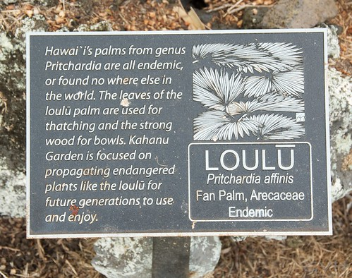 Endemic plants to Hawaii are being preserved at Kahanu Gardens