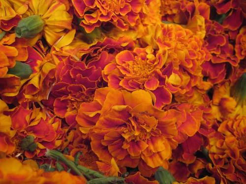 Marigold melange