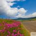 Tapalpa Camino de Flores Silvestres by PhoTito73