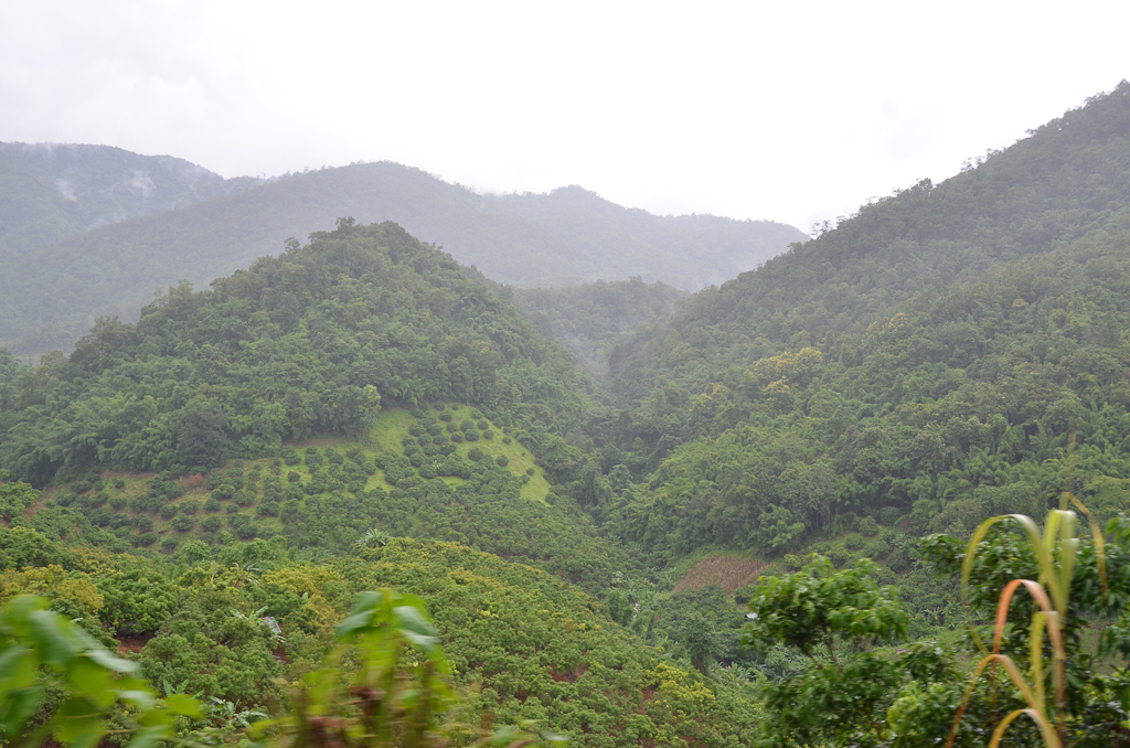 A forest in Thailand