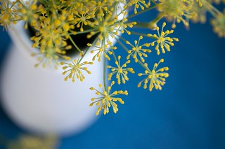 fennel, a spice for Wednesdays.