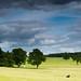 Harewood Landscape