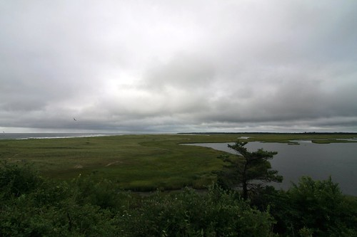 the salt marsh