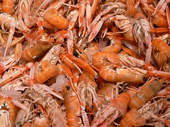 shrimp, animal, dendrobranchiata, caridean shrimp, crustacean, seafood, invertebrate,