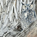 Great Horned Owl a wink at you 23x16 by colographicalchemy at the library