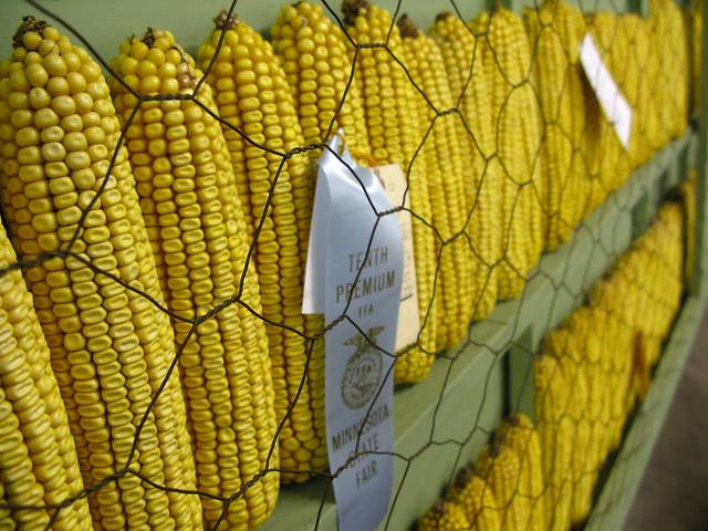 2011.08.27 - Corn!