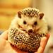 Gendo the Hedgehog