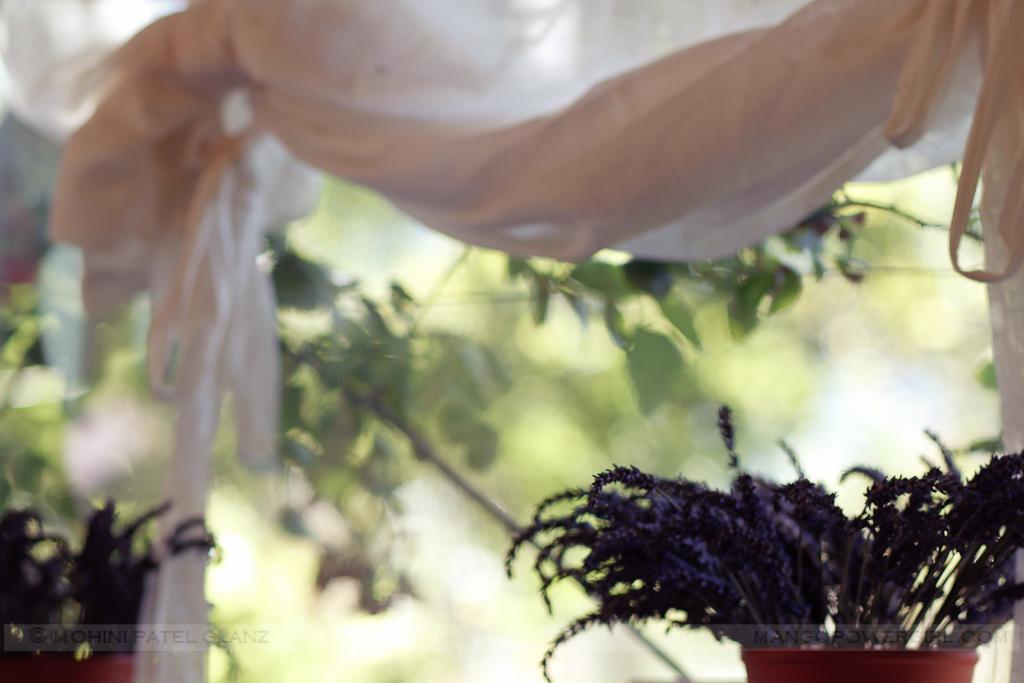 lavender hill farm 12