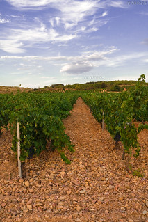 Vineyards (II)
