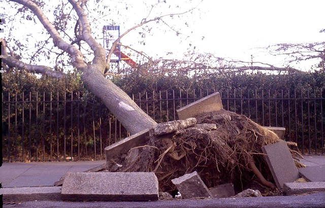 October 1987 Damage Southend Essex