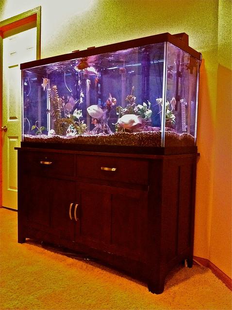 Fish tank movie 90 gallon sale 90 gallon 90 gallon reef for 90 gallon fish tank for sale