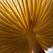 Below the mushroom by citrusjig