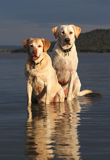 Labs On A Rock