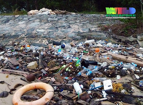 Oil-slicked Tanah Merah: Litter build up on the high shore