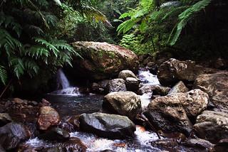 Falls El Yunque National Forrest - Puerto Rico