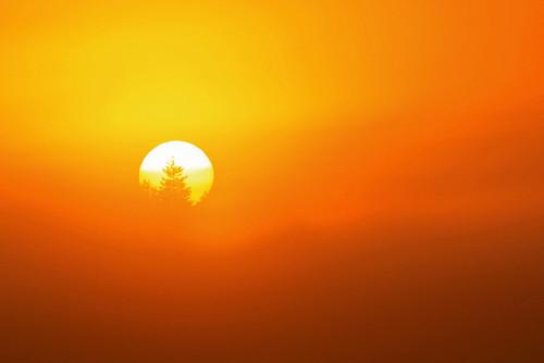 trees sun silhouette fog sunrise canon washingtonstate t1i matthewreichel