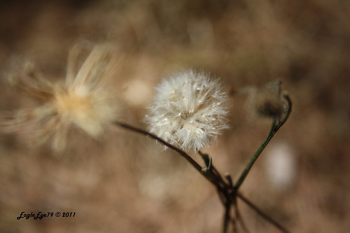 macro nature bokeh macroflowerlovers canoneos1000d