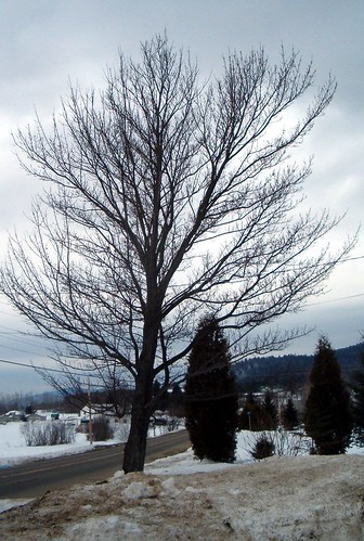 road trees winter snow tree mexico landscapes scenery maine newengland hills dirtysnow mexicomaine