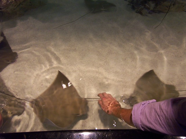 ian touches cownose rays