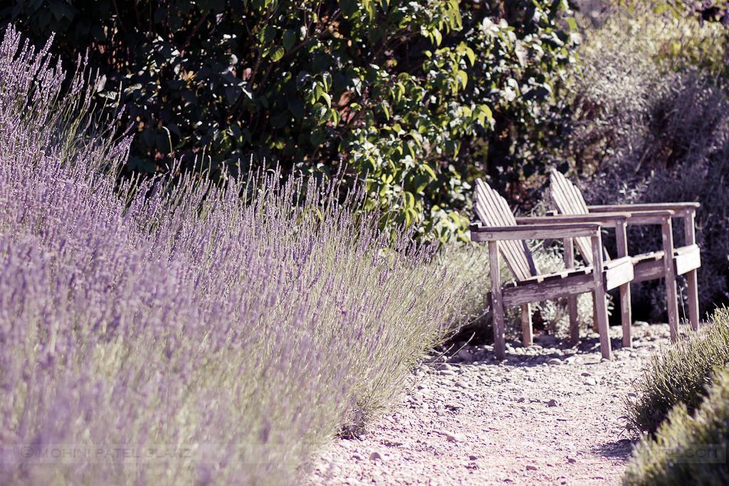lavender hill farm 9