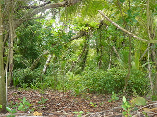 Selva tropical de Cayos Zapatillas (Panamá)