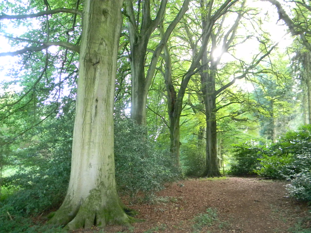 Trees Moreton-in-Marsh Circular
