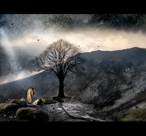 Hermit Tree