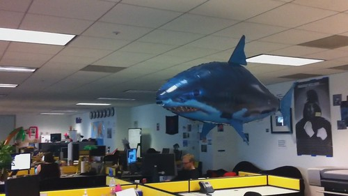 Shark at Flickr HQ!!