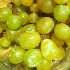 plant(0.0), liqueur(0.0), gooseberry(0.0), sultana(1.0), grape(1.0), produce(1.0), fruit(1.0), food(1.0),