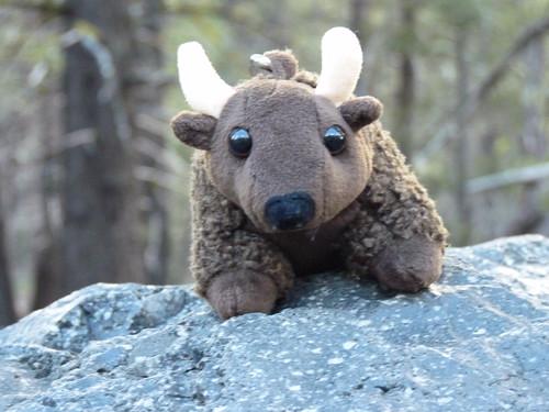 Buddy Bison on the Hot Rock - Lost Creek (Lassen NP)